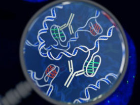 This is an artist's impression of the i-motif DNA structure inside cells, along with the antibody-based tool used to detect it. (Chris Hammang)