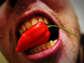 A mouthful of pain... a man taking a bite of the Bhut jolokia or 'ghost pepper' one of the hottest chili peppers in the world. It has a Scoville rating of around 1,041,427 Scoville Heat Units. (Lauri Rantala, Creative Commons Attribution 2.0 Generic via Flickr)