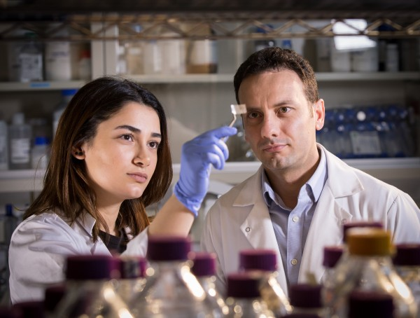 Researchers Hanie Yousefi and Tohid Didar examine a transparent patch which can be used in food packaging to detect pathogens. (McMaster University)