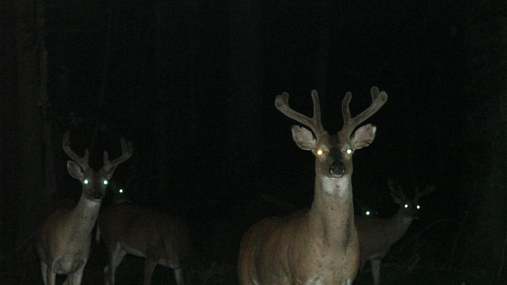 A herd of deer at night (lovecatz via Creative Commons Attribution-ShareAlike 2.0 Generic and Flickr)