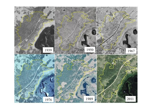 A seventy-two year aerial photo chronosequence showing forest cover change within the Pando aspen clone, Utah, USA. Photos were georectified using ArcMap® software to ensure accurate scale and location alignment. Yellow polygon depicts the boundary of the 43 ha clone as projected over each photo year. (Base images courtesy of USDA Aerial Photography Field Office, Salt Lake City, Utah)
