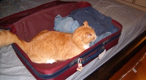 Here's one thing you definitely shouldn't pack (Creative Commons photo by Flickr user ClintJCL)