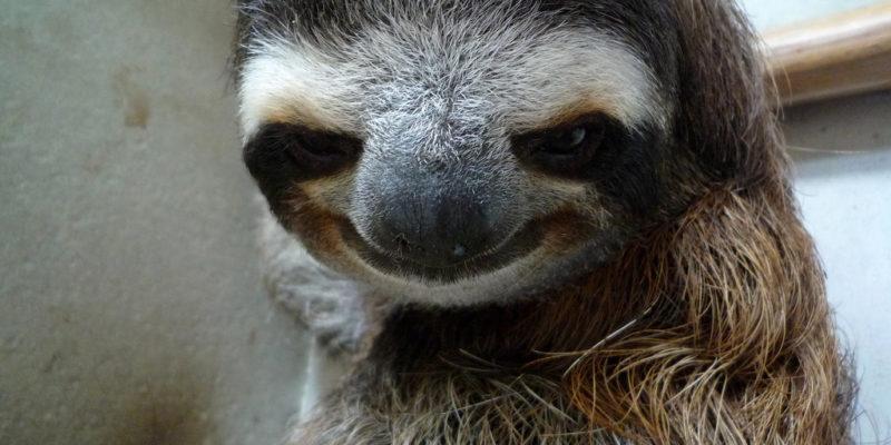 sloth stalker