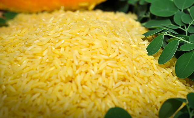 "An undated handout photofrom they International Rice Research Institute (IRRI) shows genetically-modified ""golden rice."" (AFP/IRRI)"