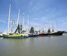 Many Plaquemines Parish shrimp boats are owned and sailed by Vietnamese immigrants.