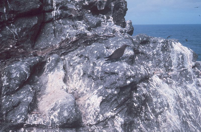 A Hawaiian bird beholds the guano left behind by sea birds.  The build-up of bird poop was quite deeper on other, unpopulated Pacific islands.