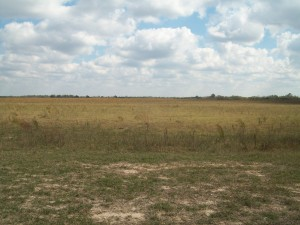 "You don't usually associate the word ""grassland"" with Louisiana — ""swamp,"" ""bayou,"" ""marsh"" being more frequently used.  But there's a huge coastal prairie all across the southwest corner of the state.   (Adley Cormier)"