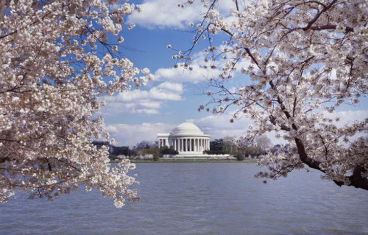 Returning to Jefferson, and his memorial at Cherry Blossom time. (Carol M. Highsmith)