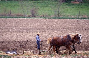 No tractors here.  Literal horsepower provides the muscle.  (Carol M. Highsmith)