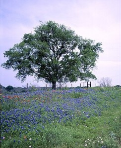Peaceful Texas Hill Country.  (Carol M. Highsmith)