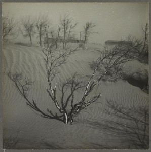 An orchard choked to death by dust.  (Library of Congress)