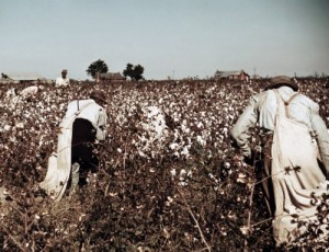 This photo was taken in 1950, not 1850, but the backbreaking chore of picking cotton hadn't changed much, at least when humans did the job.  (Library of Congress)