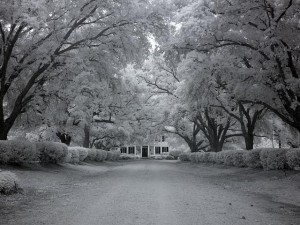Couldn't resist showing you another of Carol's infrared images.  This is of Chasley Estate in Monroe County.  (Carol M. Highsmith)