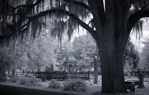 "This is Carol's ""infrared"" image of a haunting, and maybe haunted? live-oak cemetery in Selma.  (Carol M. Highsmith)"