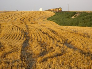 A Union Pacific train passes a Kansas field of wheat stubble.  (C.K. Hartman, Flickr Creative Commons)
