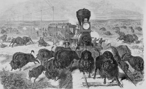 "For ""sport,"" railroad passengers kill buffalo and leave them to rot in the Kansas sun.  (Library of Congress)"