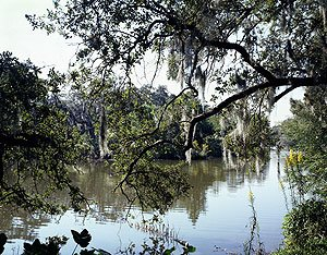 And you wonder why New Orleans is so enticing.  This is City Park, right in town, not some swamp scene clear across Louisiana.  (Carol M. Highsmith)