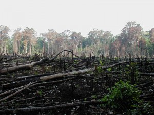 Deforestation for agriculture.  (Jami Dwyer, Wikipedia Commons)