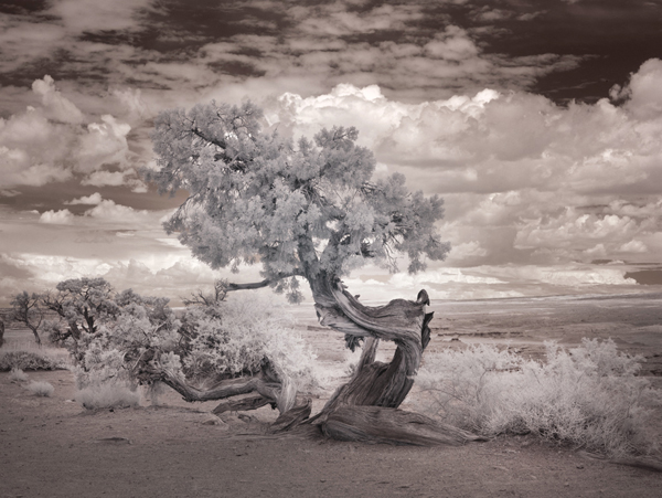 Don't think for a moment, though, that Carol can't make beautiful music, in a photographic sense, with images.  This was taken with her infrared camera.  (Carol M. Highsmith)