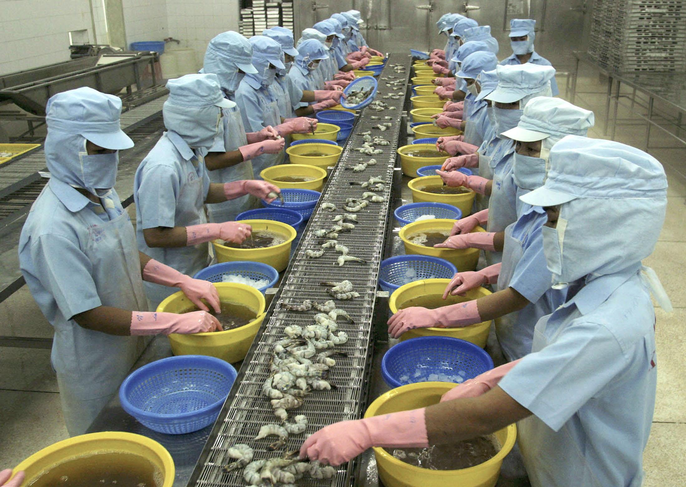 Vietnam'da bir fabrikada işçiler karides kabuklarını ayıklıyor