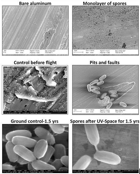 Alüminyum üzerindeki Bacillus pumilus SAFR-032 sporlarının uzay şartlarına maruz kalmadan önce ve sonraki görüntüleri