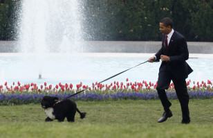 President Obama walks Bo, his 6-month-old Portuguese water dog, on the South Lawn at the White House in this April 2009 file photo.2009.
