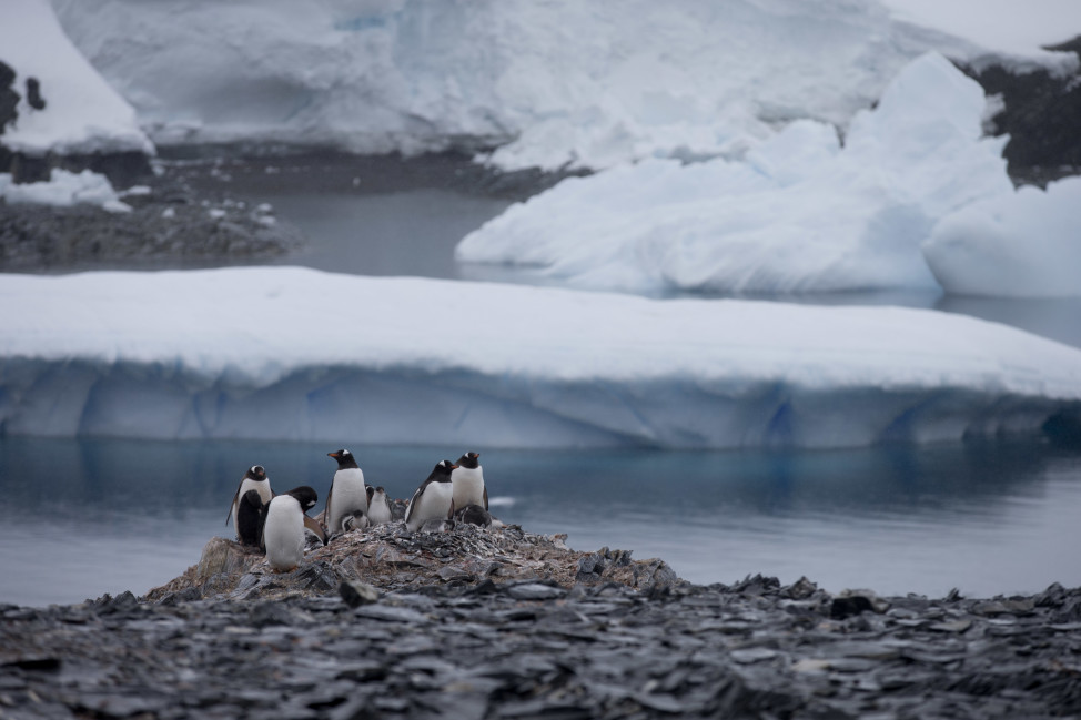 Here on the Antarctic peninsula, where NASA scientists say the continent is warming rapidly, 49 billion tons of ice is lost a year in this Jan. 2015 photo. (AP)
